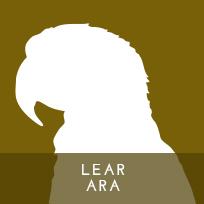 actp-aktuelleprojekte-learara-01