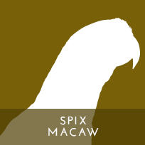 actp-icon-spixmacaw-01
