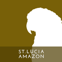 actp-icon-stluciaamazon-01