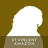 actp-icon-stvincentamazon-01