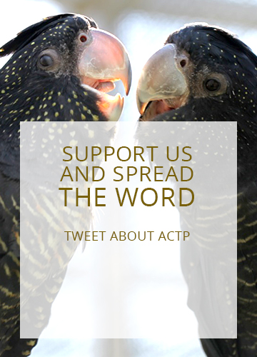 actp-twitter-eng-02