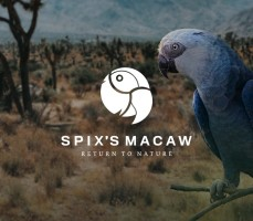 spixs_article_img